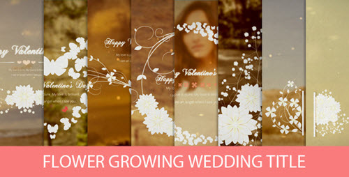Flower Growing Wedding Title - After Effect Project