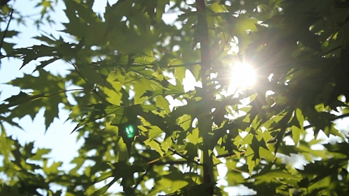 Leaf In The Sun - Stock Footage (Videohive)