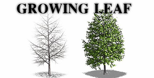 Growing Leaf - Motion Graphic (Videohive)