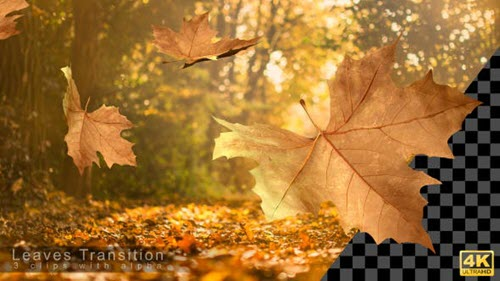 Autumn Leaves Transitions - 17978836 - Motion Graphics